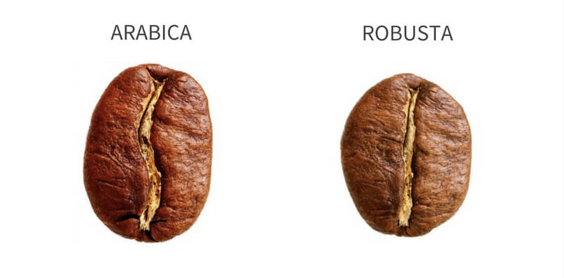Shape Difference between Arabica and Robusta Coffee Beans
